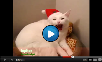 Image of: Funniest Okay Well We Are On To Volume For Wackys Archive Librarycome Join Us For Another Round Of Laughs Ebaums World Jingle Bells By Animals Funny Animal Singing Video Youtube Funny