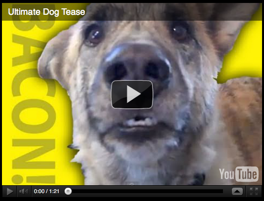 talking dog spoof, canine bacon treats, funny comedy, creative lip syncing, doggy tease, comical video